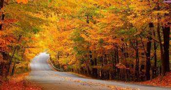 droga-drzewa-jesien-las